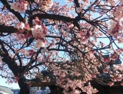 948ABCnail_Shinjuku