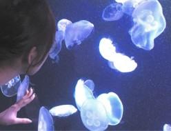 観光 | サンシャイン水族館 クラゲ | 高品質で安いネイルサロンABCネイル 池袋店