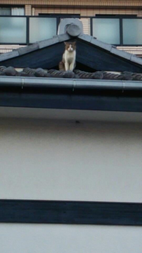 動物   野良猫アップ   高品質で安いネイルサロンABCネイル 新宿店
