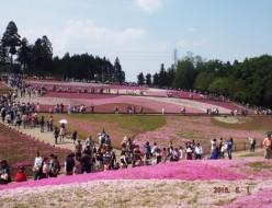 観光 | 芝桜 | 高品質で安いネイルサロンABCネイル 銀座店