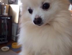 ペット | 愛犬 | 高品質で安いネイルサロンABCネイル 新宿店