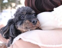 ペット | 愛しの愛犬2 | 高品質で安いネイルサロンABCネイル 池袋店