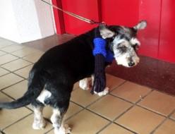 ペット | 犬 | 高品質で安いネイルサロンABCネイル 銀座店