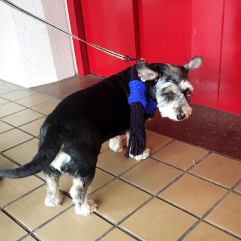 ペット   犬   高品質で安いネイルサロンABCネイル 銀座店