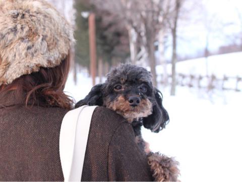ペット | 愛しの愛犬1 | 高品質で安いネイルサロンABCネイル 池袋店