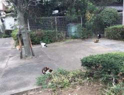 お出かけ | 猫の集会 | 高品質で安いネイルサロンABCネイル 銀座店