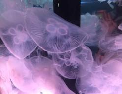 お出かけ | 水族館 | 高品質で安いネイルサロンABCネイル 池袋店