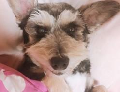 ペット |愛犬 | 高品質で安いネイルサロンABCネイル 銀座店