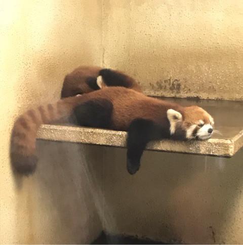 おでかけ | 動物園 | 高品質で安いネイルサロンABCネイル 大宮店