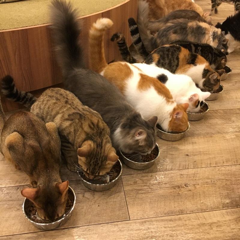 おでかけ | 猫カフェ | 高品質で安いネイルサロンABCネイル 柏店