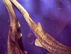 おでかけ | 新江ノ島水族館 | 高品質で安いネイルサロンABCネイル 新宿店