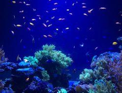 おでかけ | サンシャイン水族館 | 高品質で安いネイルサロンABCネイル 池袋店