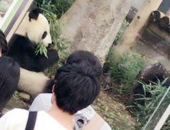 おでかけ | 上野動物園 | 高品質で安いネイルサロンABCネイル 銀座店